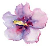Όμορφο ρόδινο λουλούδι, ζωγραφική Watercolor Στοκ φωτογραφία με δικαίωμα ελεύθερης χρήσης