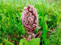 Όμορφο ρόδινο λουλούδι και πράσινο υπόβαθρο χλόης Στοκ φωτογραφία με δικαίωμα ελεύθερης χρήσης