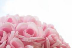Όμορφο ρόδινο λουλούδι στο άσπρο υπόβαθρο Στοκ Εικόνες