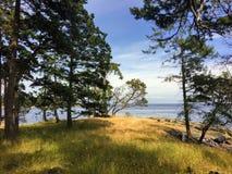 Όμορφο σημείο Tugboat στο νησί με ένα δέντρο arbutus κατάκλισης στοκ φωτογραφία με δικαίωμα ελεύθερης χρήσης