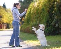 Όμορφο σκυλί κατάρτισης γυναικών Στοκ εικόνα με δικαίωμα ελεύθερης χρήσης