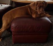 Όμορφο σκυλί κουταβιών Στοκ φωτογραφία με δικαίωμα ελεύθερης χρήσης