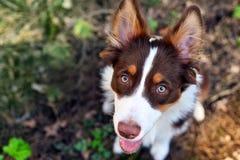 όμορφο σκυλί Στοκ φωτογραφίες με δικαίωμα ελεύθερης χρήσης