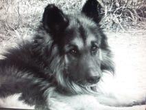 όμορφο σκυλί στοκ εικόνα με δικαίωμα ελεύθερης χρήσης