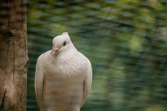 όμορφο σπουργίτι στοκ φωτογραφίες με δικαίωμα ελεύθερης χρήσης