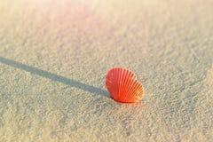 Όμορφο στρογγυλό επίπεδο κόκκινο θαλασσινό κοχύλι στην άμμο παραλιών στην ακτή Χρυσό φως του ήλιου με τη ρόδινη φλόγα Χαλάρωση τα Στοκ εικόνα με δικαίωμα ελεύθερης χρήσης