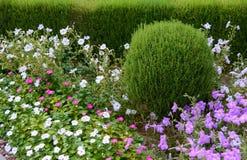 Όμορφο σχέδιο του ναυπηγείου Ανθίζοντας κρεβάτια και φράκτες λουλουδιών Λουλούδια και διακοσμητικοί θάμνοι στο ναυπηγείο στοκ εικόνες