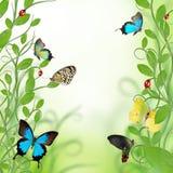 όμορφο σχέδιο floral διανυσματική απεικόνιση