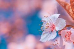 Όμορφο σχέδιο έννοιας υποβάθρου φύσης στοκ εικόνα