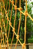 Όμορφο σχοινί και καθαρή αναρρίχηση στο πάρκο στη φύση στοκ εικόνες με δικαίωμα ελεύθερης χρήσης
