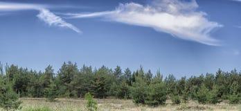 Όμορφο τοπίο Άποψη του δάσους πεύκων στο μπλε ουρανό με το υπόβαθρο σύννεφων Στοκ Εικόνες