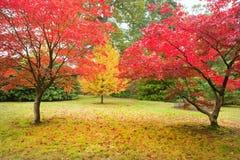 Όμορφο τοπίο εικόνας φύσης πτώσης φθινοπώρου Στοκ Εικόνα