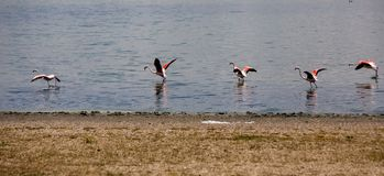 Όμορφο τοπίο και αντανάκλαση στην αλατισμένη λίμνη στην Τουρκία στοκ εικόνες