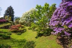 Όμορφο τοπίο λουλουδιών στο βοτανικό κήπο της βίλας Taranto σε Pallanza, Verbania, Ιταλία στοκ φωτογραφίες