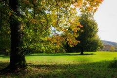 Όμορφο τοπίο με τα μαγικά δέντρα φθινοπώρου και πεσμένα φύλλα με ένα αγροτικό υπόβαθρο Guriezo, Cantabria, Ισπανία Στοκ εικόνες με δικαίωμα ελεύθερης χρήσης