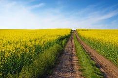 Όμορφο τοπίο με τον οδικό μέσο κίτρινο τομέα του βιασμού στο s Στοκ φωτογραφία με δικαίωμα ελεύθερης χρήσης