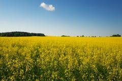 Όμορφο τοπίο με τον τομέα του κίτρινου canola Στοκ Εικόνα