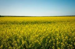 Όμορφο τοπίο με τον τομέα του κίτρινου canola Στοκ Εικόνες
