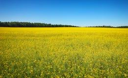 Όμορφο τοπίο με τον τομέα του κίτρινου canola Στοκ εικόνα με δικαίωμα ελεύθερης χρήσης