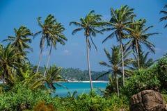 Όμορφο τοπίο με τους φοίνικες, Σρι Λάνκα Στοκ εικόνα με δικαίωμα ελεύθερης χρήσης
