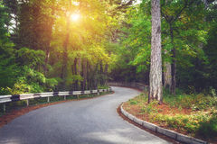Όμορφο τοπίο με το δρόμο ασφάλτου, το πράσινα δάσος και το οδικό σημάδι στη ζωηρόχρωμη ανατολή το καλοκαίρι καλοκαίρι πεύκων 2008 στοκ εικόνα με δικαίωμα ελεύθερης χρήσης