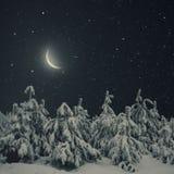 Όμορφο τοπίο νύχτας χειμερινής φύσης Καλυμμένο δέντρα χιόνι πεύκων Στοκ Εικόνες