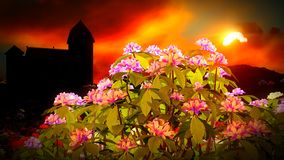 όμορφο τοπίο λουλουδιών Στοκ Εικόνες