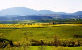Όμορφο τοπίο, πράσινο και κίτρινο λιβάδι με ένα κοπάδι των αγελάδων στην απόσταση Στοκ Φωτογραφίες