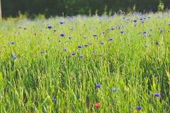 Όμορφο τοπίο στον τομέα λουλουδιών στοκ φωτογραφία με δικαίωμα ελεύθερης χρήσης