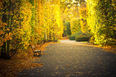 Όμορφο τοπίο στο φθινοπωρινό κίτρινο πάρκο στοκ εικόνες