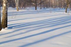 Όμορφο τοπίο στο χειμερινό πάρκο, τα ξύλα Σκιές των δέντρων στο χιόνι, διάστημα αντιγράφων Στοκ Φωτογραφία