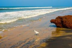 Όμορφο τοπίο της ακτής με ένα άσπρο πουλί Varkala στοκ φωτογραφίες