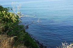 Όμορφο τοπίο της Κρήτης, κλάδοι, χωρίς φύλλα φύλλων, θάλασσα Αναρωτιέται της φύσης Στοκ Φωτογραφία