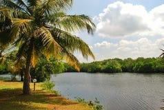 Όμορφο τοπίο της Σρι Λάνκα Στοκ Φωτογραφίες