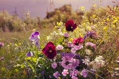 Όμορφο τοπίο τομέων πρωινού υπαίθριο με τα λουλούδια Στοκ Εικόνες