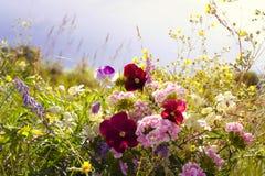 Όμορφο τοπίο τομέων πρωινού υπαίθριο με το ροζ βιολέτων και ot Στοκ φωτογραφία με δικαίωμα ελεύθερης χρήσης