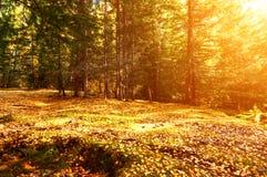 Όμορφο τοπίο του φθινοπώρου σε Xinjiang Στοκ φωτογραφία με δικαίωμα ελεύθερης χρήσης