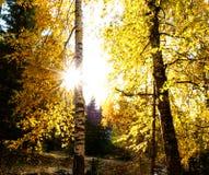 Όμορφο τοπίο του φθινοπώρου σε Xinjiang Στοκ εικόνες με δικαίωμα ελεύθερης χρήσης