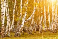 Όμορφο τοπίο του φθινοπώρου Στοκ εικόνες με δικαίωμα ελεύθερης χρήσης