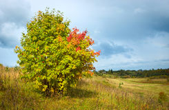 Όμορφο τοπίο φθινοπώρου με μια μόνη κόκκινη τέφρα Στοκ φωτογραφίες με δικαίωμα ελεύθερης χρήσης