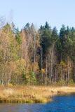 Όμορφο τοπίο φθινοπώρου με τα κίτρινα φύλλα στους υγρότοπους Τοπίο ελών το φθινόπωρο Στοκ Εικόνα