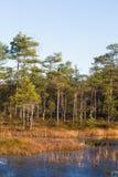 Όμορφο τοπίο φθινοπώρου με τα κίτρινα φύλλα στους υγρότοπους Τοπίο ελών το φθινόπωρο Στοκ φωτογραφίες με δικαίωμα ελεύθερης χρήσης