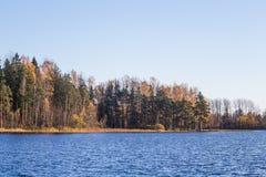Όμορφο τοπίο φθινοπώρου με τα κίτρινα φύλλα στους υγρότοπους Τοπίο ελών το φθινόπωρο Στοκ εικόνα με δικαίωμα ελεύθερης χρήσης