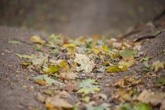 Όμορφο τοπίο φθινοπώρου με τα κίτρινους δέντρα και τον ήλιο Ζωηρόχρωμο φύλλωμα στο πάρκο Μειωμένο φυσικό υπόβαθρο φύλλων στοκ φωτογραφία