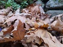 Όμορφο τοπίο φθινοπώρου με τα κίτρινους δέντρα και τον ήλιο Ζωηρόχρωμο φύλλωμα στο πάρκο Μειωμένο φυσικό υπόβαθρο φύλλων στοκ εικόνες