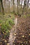 Όμορφο τοπίο φθινοπώρου με τα φύλλα φθινοπώρου στοκ φωτογραφία με δικαίωμα ελεύθερης χρήσης
