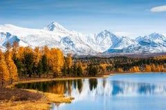 Όμορφο τοπίο φθινοπώρου σε Altai, Σιβηρία, Ρωσία στοκ εικόνες