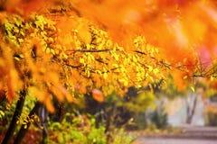 όμορφο τοπίο φθινοπώρου Τοπίο φθινοπώρου με τα ζωηρόχρωμα fores Στοκ εικόνα με δικαίωμα ελεύθερης χρήσης