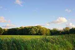 Όμορφο τοπίο χλόης Στοκ Εικόνα