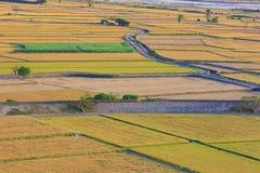 Όμορφο τοπίο χωρών του ορυζώνα ρυζιού Στοκ Εικόνες
